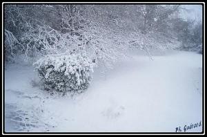 neige fin de matinée