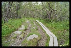 chemin planche