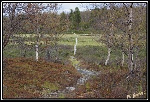 chemin tourbière
