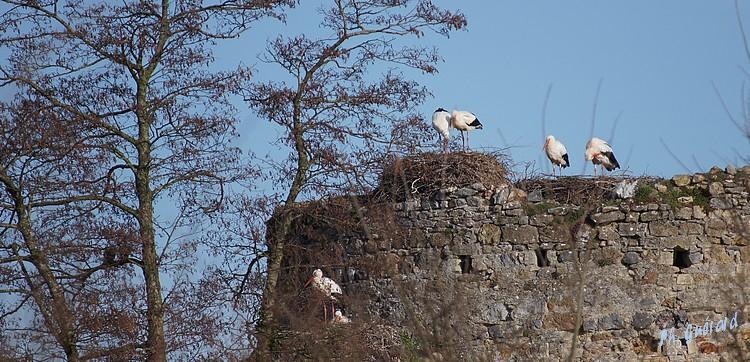 nids château