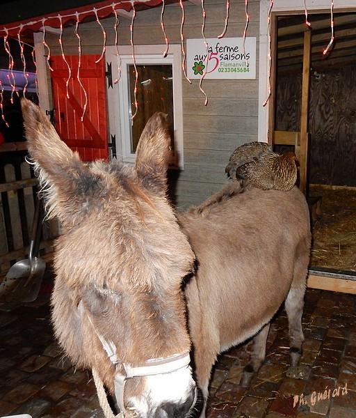 L'âne et sa cavalière
