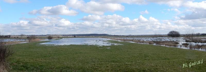 Marais à peine couvert d'eau