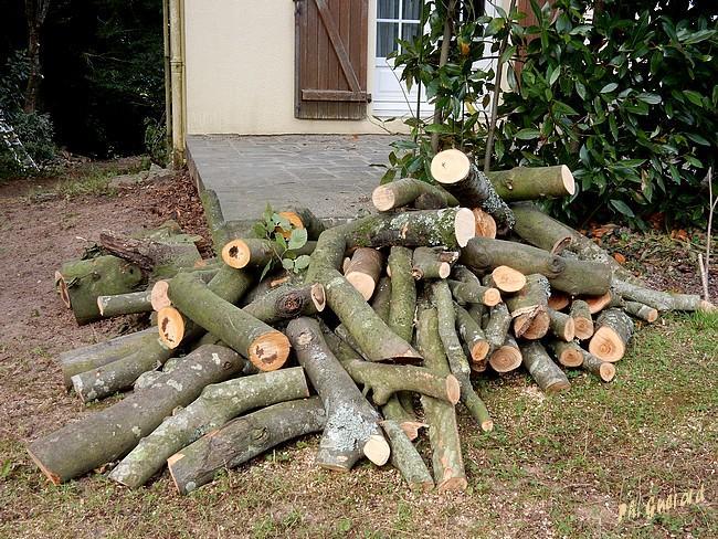 Un des tas de bois sur le devant de la maison