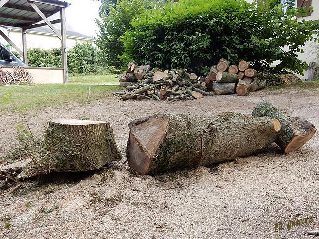 Un des tas de derrière la maison avec le tronc d'un chêne