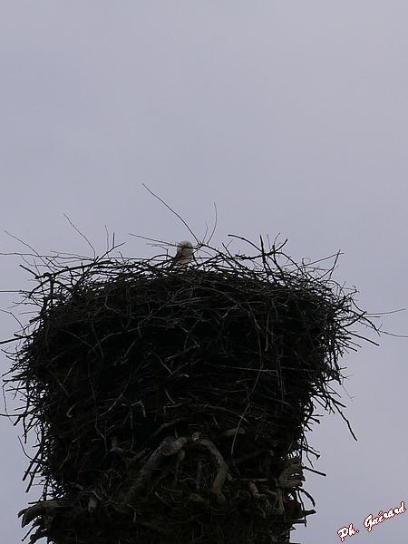 Tête qui dépasse du nid à Poribet