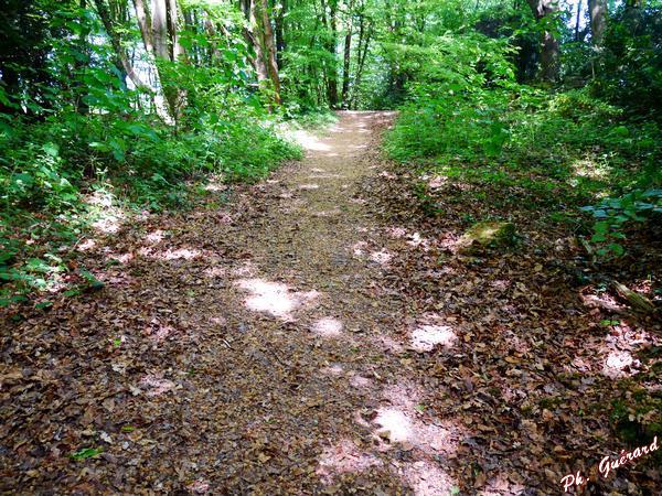 Chemin dans le bois St-Martin