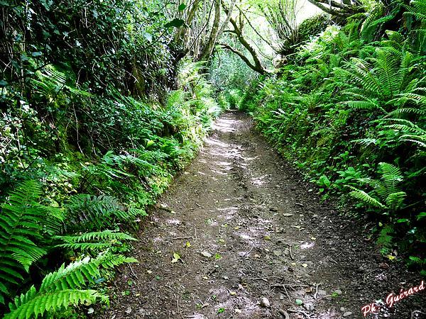 Dernier chemin vers Montaigu-la-Brisette