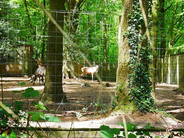 Parc Animalier de Montaigu-la-Brisette