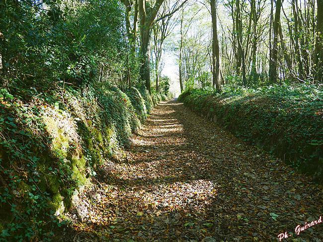Chemin du Tourp vers Eculleville