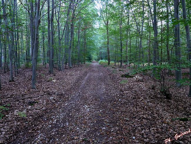 Toujours la forêt