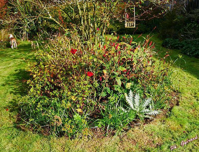 Visite du jardin de la Ferme des Roches à Martinvast