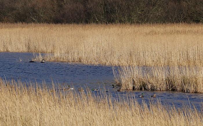 Oiseaux sur l'eau