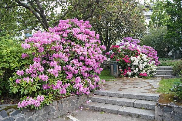 jardin alexandra
